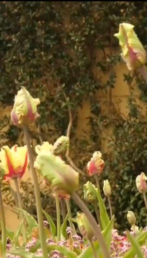 ТСН рассказала о значении цветов на королевских свадьбах в Британии