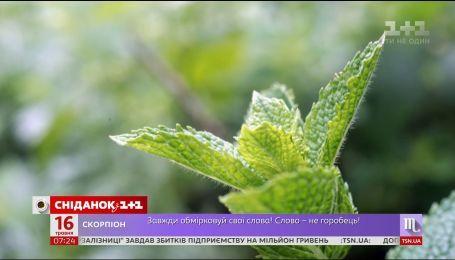 Топ-5 рослин, які відлякують комарів