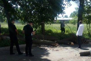 В центре Черкасс на школьников упало дерево
