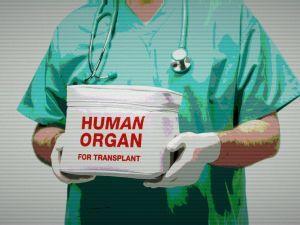 Трансплантология как лакмус для общества
