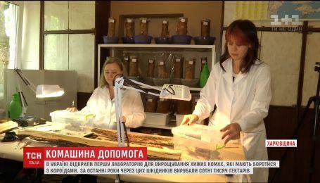 На Харківщині відкрили першу в Україні лабораторію для вирощування хижих комах