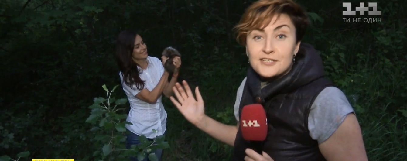 """Працівники """"1+1"""" урятували пораненого їжачка в центрі Києва"""