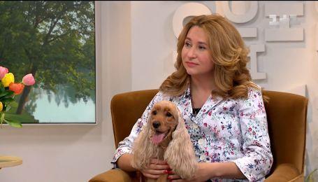 Хозяйка кокер-спаниелей рассказала все, что нужно знать о собаках этой породы
