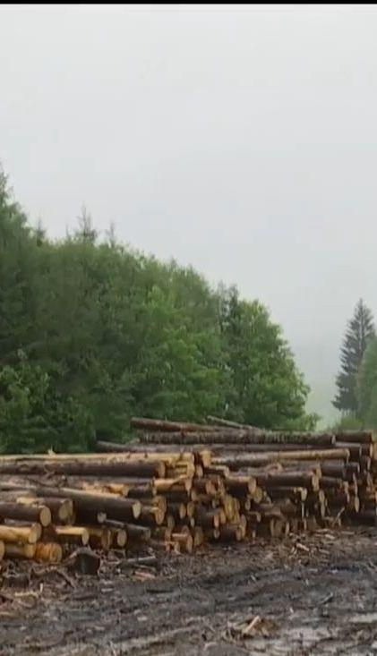 Правоохоронці викрили незаконний продаж деревини, хоча самих вирубок у лісі не знайшли