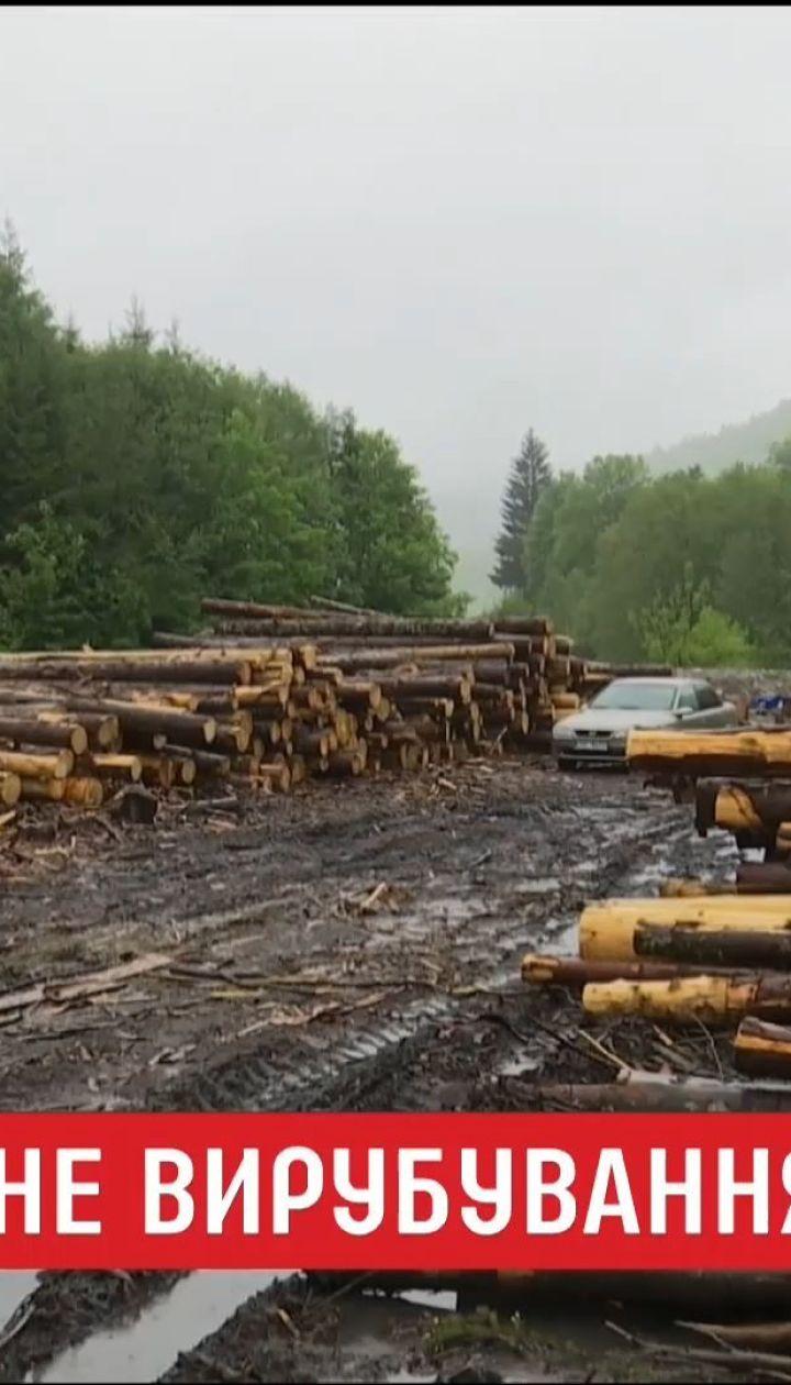 Правоохранители разоблачили незаконную продажу древесины, хотя самих рубок в лесу не нашли