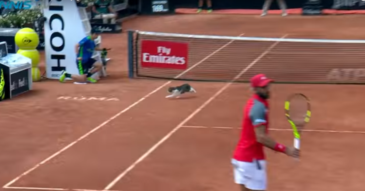 Теннисист чуть не прибил кота, который выбежал на корт прямо посреди матча