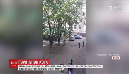 В Днепре спасатели брандспойтом снимали кота с дерева