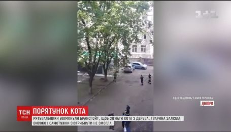 У Дніпрі рятувальники брандспойтом знімали кота з дерева