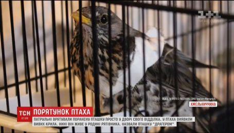 Поліцейські Хмельницького врятували поранену пташку просто у дворі свого відділка