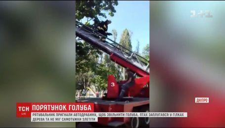 В Днепре спасатели провели спецоперацию через голубя, который застрял в ветвях