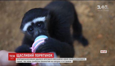 В китайском зоопарке показали белобрового гиббона, которого нашли на границе с Мьянмой