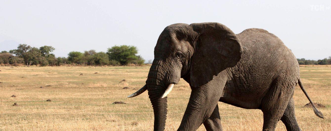 Ноев Ковчег ХХІ века. Как Африку заселяют дикими животными, которых массово уничтожали - Washington Post