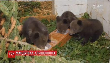 В Болгарии медвежат-сирот отправили в Грецию в специальный центр для воспитания