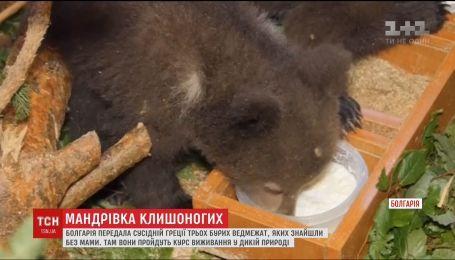 Медвежат-сирот из Болгарии отправили на подготовку к самостоятельной жизни в Грецию