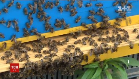 На Волині за два дні масово вимерли бджоли