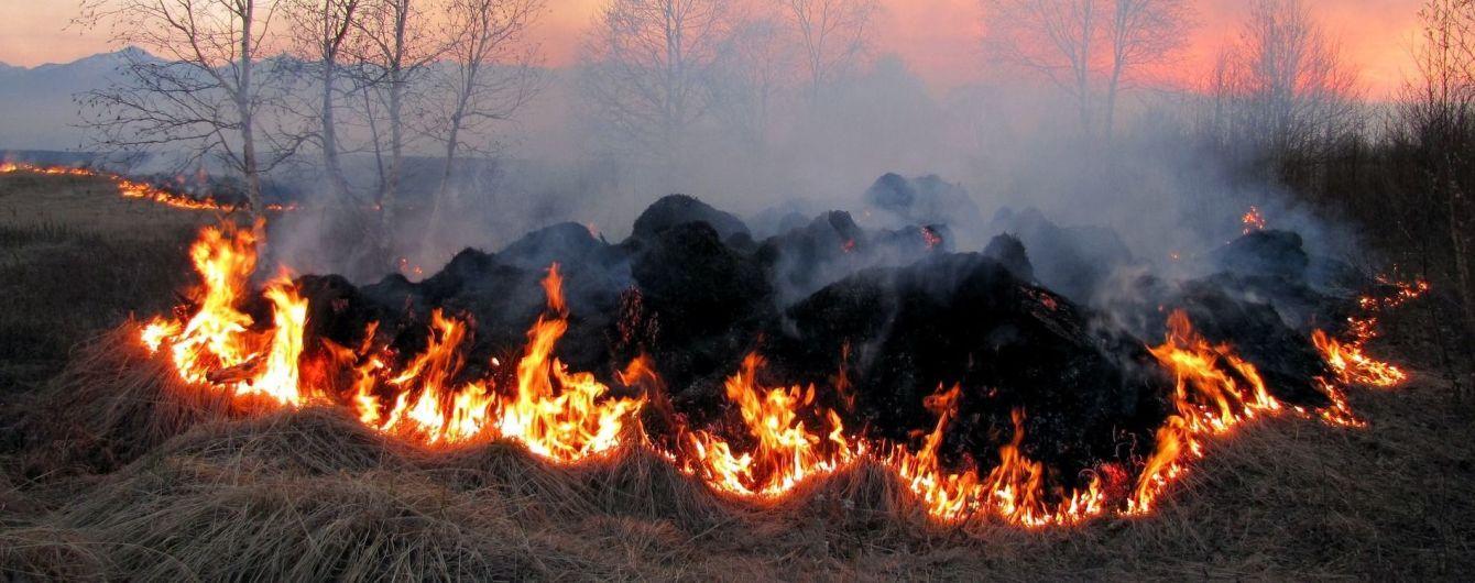 На Житомирщині подружжя згоріло живцем під час паління сухостою