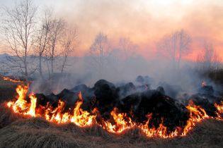 В Киеве на левом берегу загорелся лесопарк
