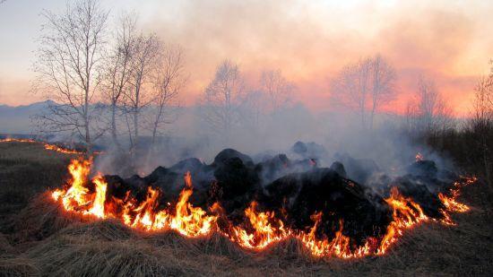 """""""Гарна локація"""". На Рівненщині підлітки випалили галявину заради фотосесії"""