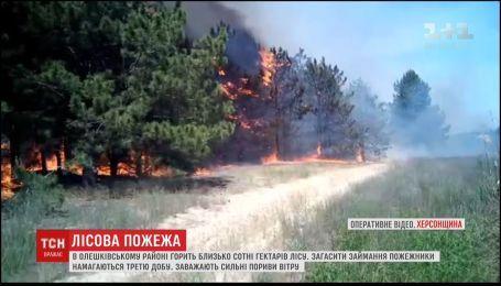 В Олешківському районі горить більше сотні гектарів лісів