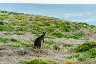 На Австралію насувається рекордно холодна температура у квітні вперше за 50 років