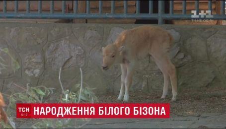 Редкое пополнение: в Белграде родился белый бизон