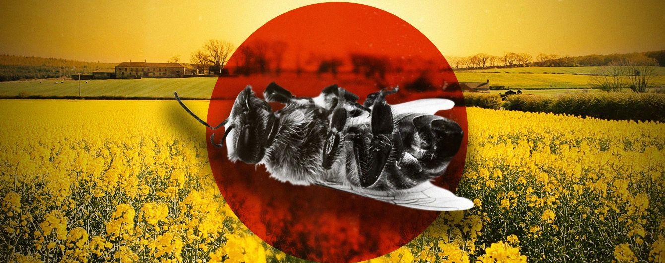 Хімічна атака без попередження. В Україні масово гинуть бджоли через оброблення полів сильними інсектицидами