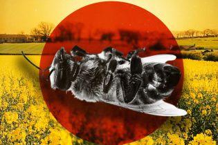 Химическая атака без предупреждения. В Украине массово гибнут пчелы из-за обработки полей сильными инсектицидами