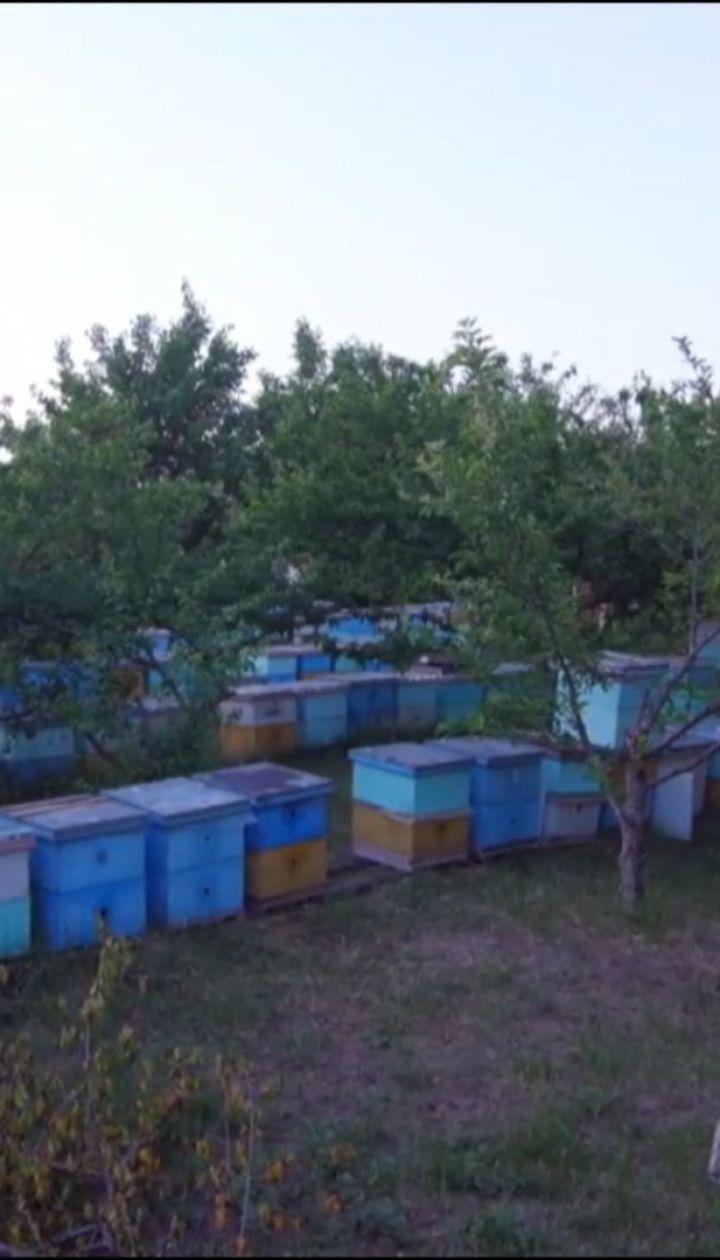 В Україні через потужні інсектициди почали масово вмирати бджоли