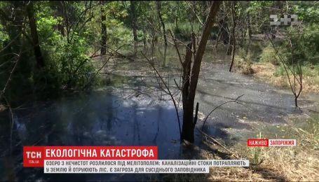 Под Мелитополем сотни квадратных метров леса затопило фекальными водами