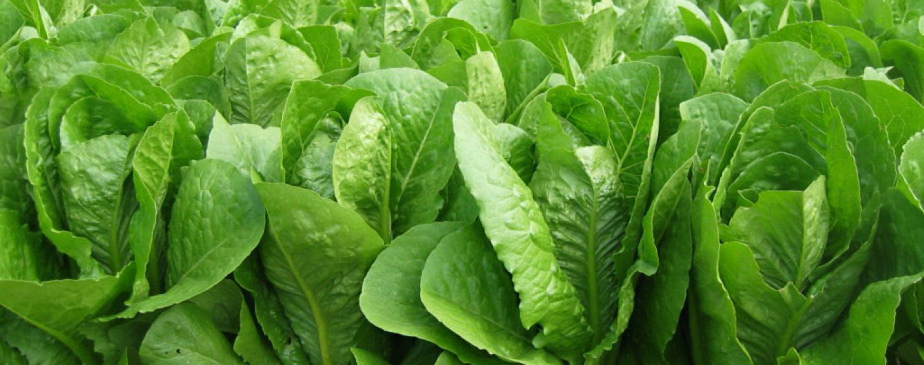Отруєння десятиліття. У США після споживання салату померли п'ять людей