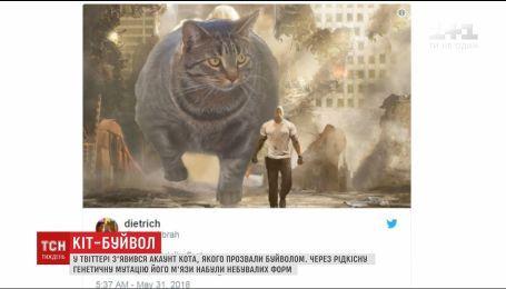"""В Twitter набирает популярность аккаунт """"кошки-буйвола"""""""