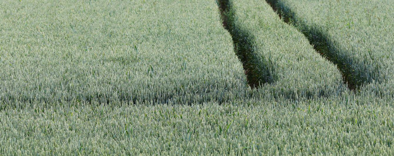Поліція боротиметься з рейдерством урожаю на українських фермах