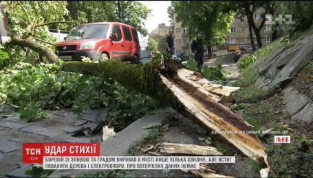 Во Львове за 10 минут ливень с градом и ветром повалил деревья и электроопоры