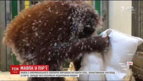 Сеть подорвало видео, на котором обезьяна разорвала одеяло и играла перьями
