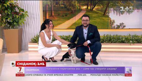 Собачка Дорі шукає нових господарів