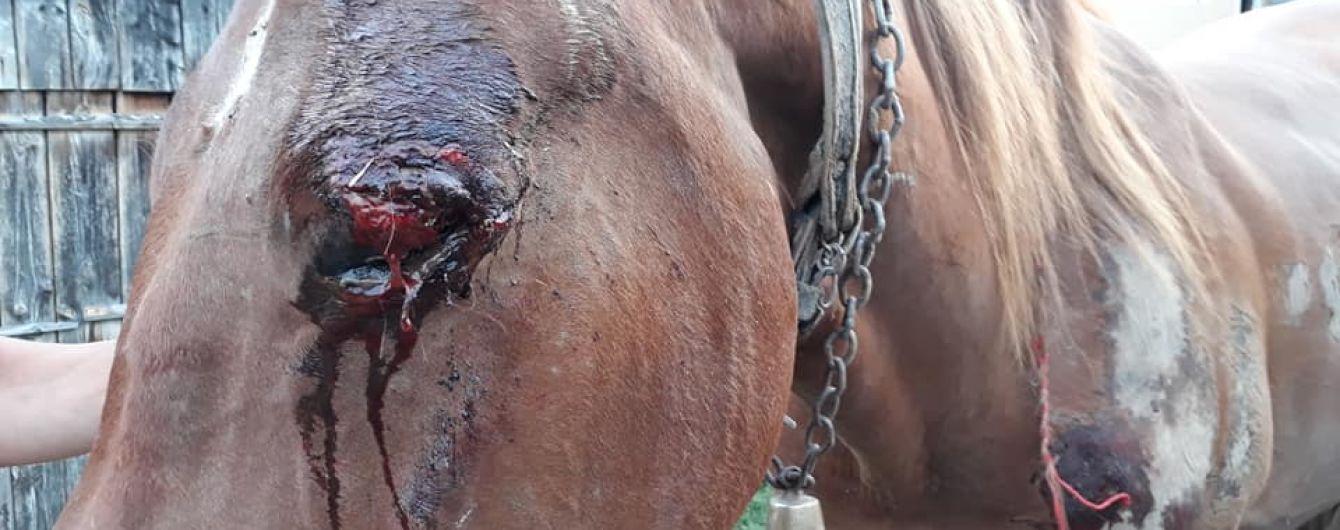 Рваное веко и ссадины: лесоводы взялись спасать коня, над которым поиздевался пьяный закарпатец