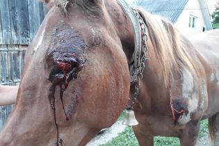 Рвана повіка та садна: лісівники взялися рятувати коня, над яким познущався п'яний закарпатець