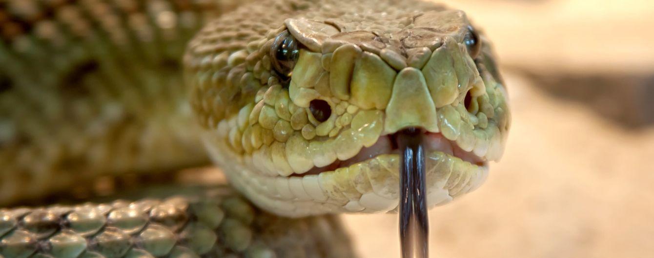 На Львовщине 12-летний ребенок попал в реанимацию после укуса змеи