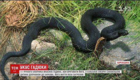 11-летнего мальчика самолетом доставили в Харьков, чтобы спасти от яда гадюки