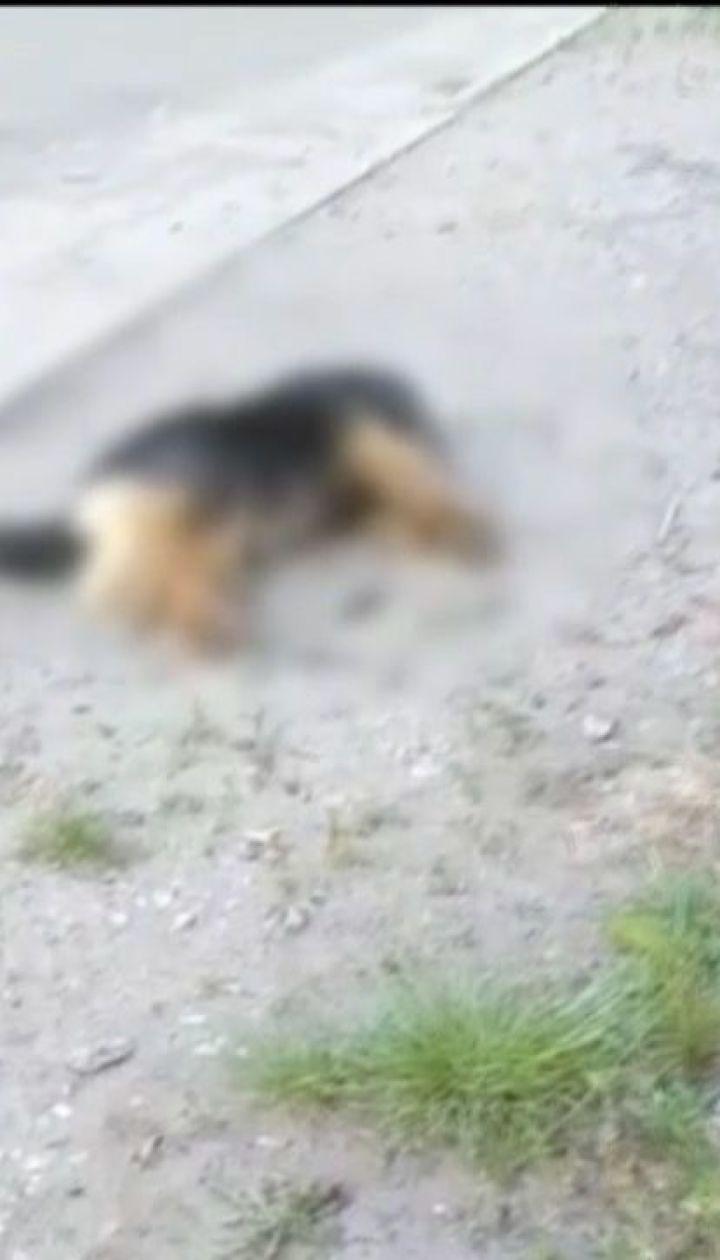 У Кропивницькому отруїли близько двох сотень псів