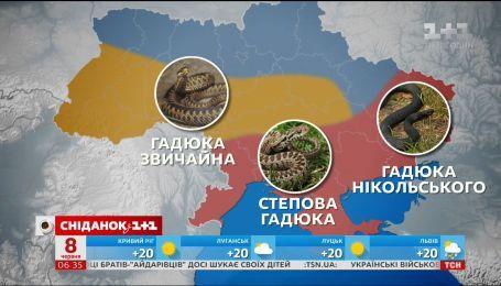 Які види змій можна зустріти в Україні