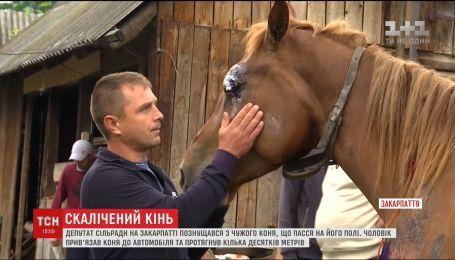 Скалічений кінь: депутат сільради на Закарпатті познущався з тварини, що випасалася на його полі