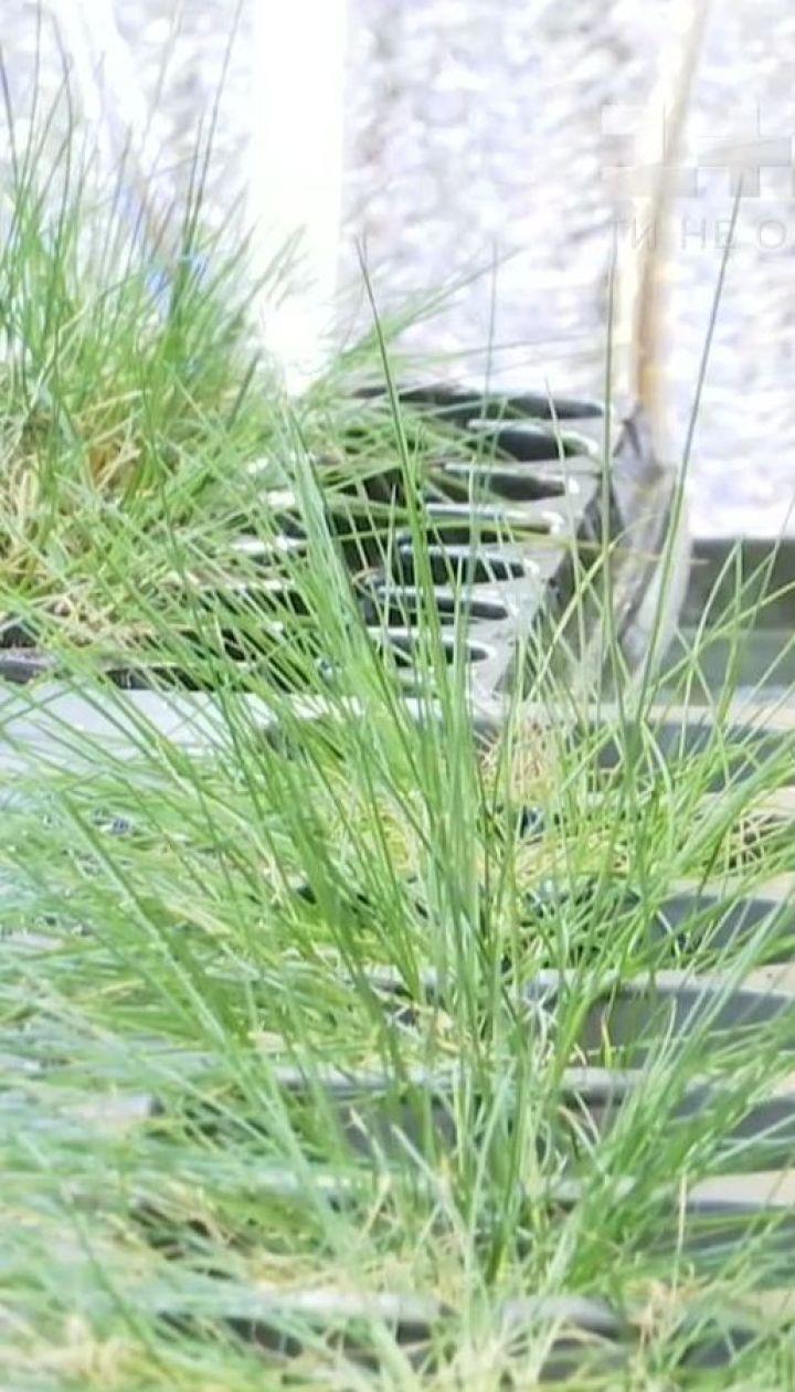 Украинцы нашли растение, что может вылечить рак кожи и дать пшенице устойчивость к морозам