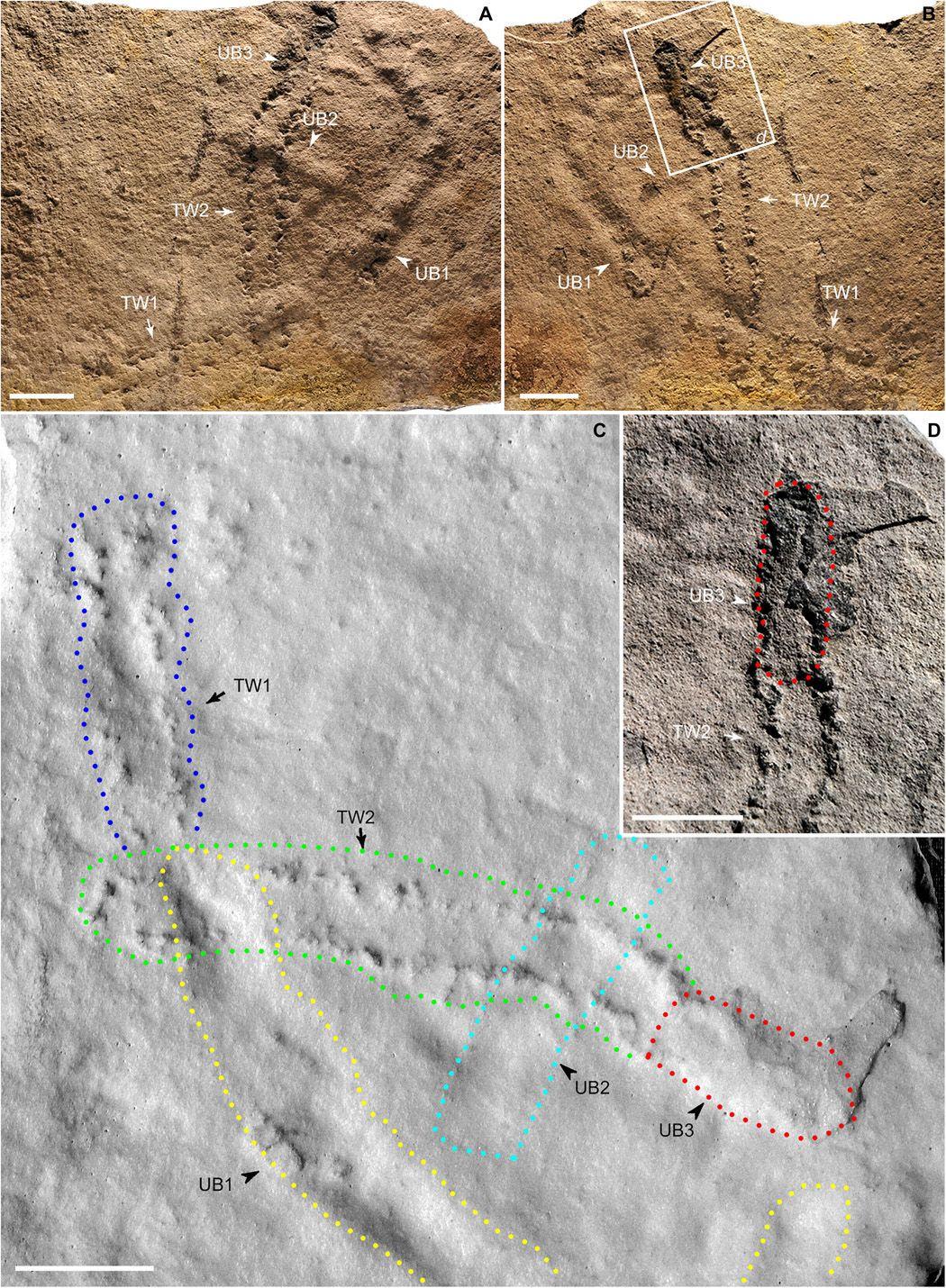 Найдавніші сліди на Землі