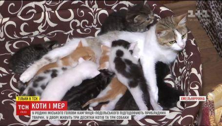Мэр Каменец-Подольского создал на собственном дворе приют для животных