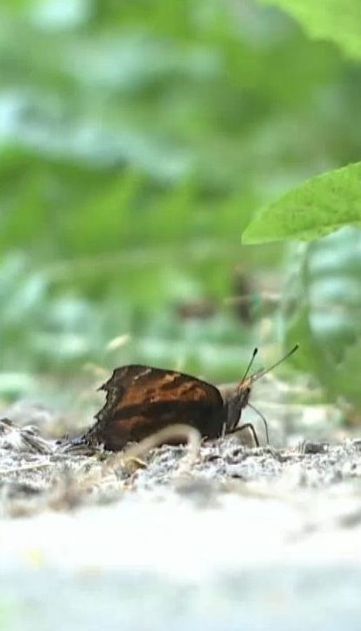 Крига з неба та зграї метеликів: українці стали свідками рідкісних явищ