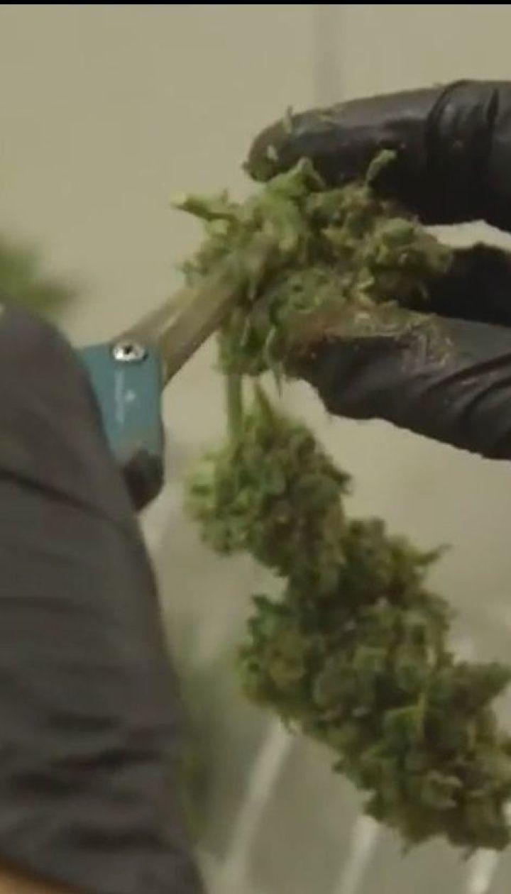 В Колорадо медсестрам разрешили выдавать ученикам медицинскую марихуану