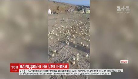 В грузинском городе Марнеули среди хлама вылупились сотни цыплят