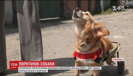 Історія собаки, який вчиться бігати на двох лапах після жорстокого нападу