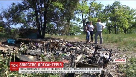 В Запорожье догхантеры заживо сожгли щенков, живших в парке